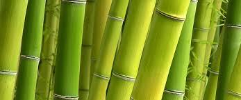 Tecnología del bambú